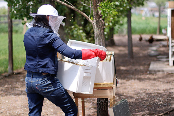 Ineptly transferring bees to their new home